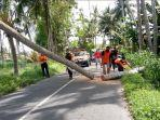 bpbd-gianyar-mengevakuasi-pohon-kelapa-tumbang-yang-menutup-jalan-raya-saba.jpg