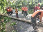 bpbd-klungkung-memangkas-10-pohon-kelapa-yang-tumbuh-menjulang-disepanjang-jalan.jpg