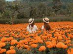 bunga-marigold-di-gemiti-garden-bali.jpg