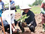 cok-ace-sedang-menanam-pohon-pisang-di-desa-pekutatan.jpg