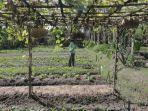 eko-martono-menyirami-lahan-pertanian-organik.jpg