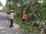 evakuasi-pemotongan-pohon-waru-gang-tumbang.jpg