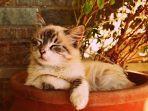 foto-ilustrasi-anak-kucing-yang-sedang-stres.jpg