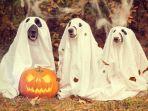 foto-ilustrasi-hari-halloween.jpg