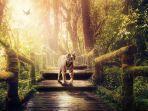 foto-ilustrasi-harimau-putih-sedang-berjalan-menuju-jembatan.jpg