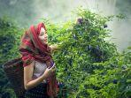 foto-ilustrasi-petani-wanita-yang-sedang-memetik-bunga.jpg