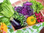 foto-ilustrasi-sayur-sayuran-yang-sudah-di-cuci-bersih.jpg