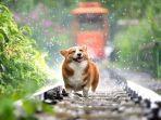 foto-ilustrasi-seekor-anjing-di-rel-kereta-api.jpg