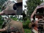 gajah-vs-kereta-api.jpg