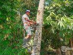 i-ketut-suastana-ciptakan-alat-bantu-memanjat-kelapa.jpg