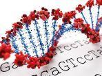 ilustrasi-genom-virus-corona-1.jpg