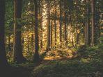ilustrasi-hutan-1.jpg