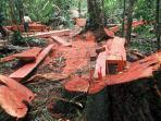 ilustrasi-illegal-logging-2322.jpg