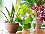 ilustrasi-tanaman-dalam-ruangan.jpg
