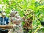 jagoan-tani-banyuwangi-sebuah-ajang-untuk-menciptakan-generasi-baru-usaha-pertanian.jpg