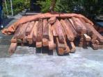 kayu-ilegal-logging.jpg
