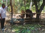 ketua-kelompok-tani-ternak-manik-sari_20151029_111955.jpg