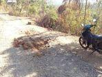 kondisi-jalan-di-pedahan-desa-tianyar-kecamatan-kubu.jpg