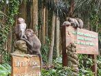 kondisi-monyet-di-objek-wisata-sangeh-saat-di-tutup-karena-ppkm-pada-minggu.jpg