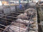 kondisi-peternakan-babi-di-dusun-uma-salakan-desa-takmung.jpg