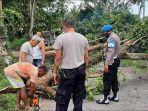masyarakat-bersama-polsek-selemadeg-saat-melakukan-evakuasi-pohon-tumbang-di-simpang.jpg