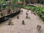 monkey-forest-ubud-gianyar-bali.jpg
