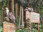 monyet-monyet-di-objek-wisata-sangeh-badung-bali-minggu-5-september-2021.jpg