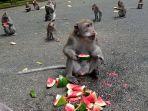 monyet-sangeh-98.jpg