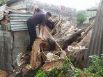 nyoman-sujana-50-terlihat-menaiki-pohon-tumbang-yang-menimpa-rumahnya.jpg