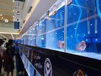 pameran-ikan-lauhan-di-denpasar-pada-minggu-1122019.jpg