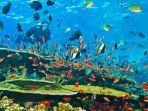 panorama-bawah-laut_20181010_172546.jpg