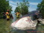 paus-sepanjang-15-meter-terdampar-di-hutan-mangrove.jpg