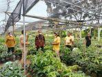 pembibitan-tanaman-avocado-yang-nantinya-ditanam-di-hutan-rabu-31-agustus-2021-kemarin.jpg