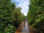 penampakan-hutan-mangrove-sensi-ekowisata-desa-perancak.jpg