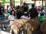 pengunjung-bali-zoo.jpg