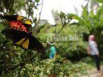 pengunjung-bisa-berinteraksi-langsung-dengan-kupu-kupu.jpg
