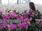pengunjung-menikmati-berbagai-jenis-bunga-anggrek-di-denpasar.jpg