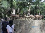pengunjung-menikmati-suasana-bali-zoo-gianyar-selasa-1472020.jpg