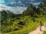 persawahan-tegalalang-tegalalang-dan-ubud-bali-indonesia_20180728_143827.jpg