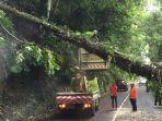 personel-bpbd-kabupaten-badung-saat-melakukan-pembersihan-pohon-tumbang-di-desa-pelaga.jpg