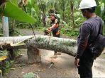 petugas-bpbd-kab-karangasem-mengevakuasi-pohon-tumbang-yang-menimpa-kabel-menutup.jpg