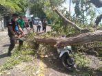 petugas-bpbd-karangasem-bersama-kepolisian-dan-warga-membersihkan-pohon-tumbang.jpg