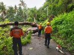 petugas-bpbd-karangasem-mengevakuasi-pohon-tumbang-12-februari.jpg