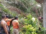 petugas-bpbd-mengevakuasi-pohon-tumbang-yang-menimpa-rumah-di-banjar-kereteg-desa-sibetan.jpg