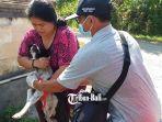 petugas-dari-dinas-pertanian-gianyar-tengah-melakukan-vaksinasi-anjing.jpg
