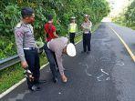 petugas-dari-polsek-baturiti-saat-melakukan-olah-tkp-di-jalan-raya-denpasar-singaraja.jpg
