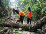 petugas-mengevakuasi-pohon-tumbang-22-november.jpg