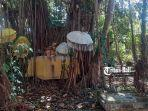 pohon-bunut-di-tengah-area-taman-festival-bali.jpg
