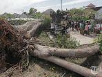 pohon-kepuh-tumbang-denpasar-2020.jpg
