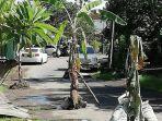 pohon-pisang-yang-sempat-ditanam-di-jalan-kayu-tulang.jpg